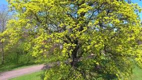 Tree green plant summer spring flight video daylight. Growth stock video