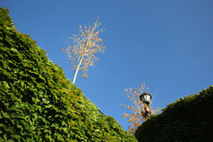 Tree, green plants and blue sky Stock Photography