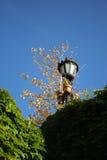 Tree, green plants and blue sky Stock Photos