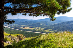 Tree green summer mountains Royalty Free Stock Image