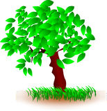 Tree, Green, Woody Plant, Plant Stock Photography