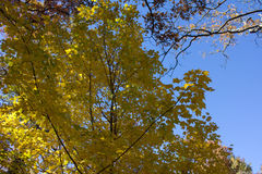 Tree. Green yellow blue tree warm Stock Image