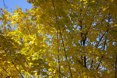 Tree. Green yellow blue tree warm Royalty Free Stock Image