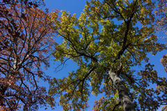 Tree. Green yellow blue tree warm Stock Photos