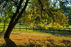 Tree with green and yellow leaves by a wooden fence at early autumn, Ada, Belgrade Stock Image