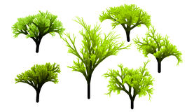 Tree greenery Stock Images