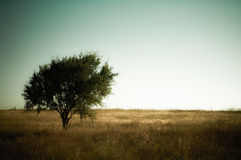 Tree on Greenish Land. Stock Photo
