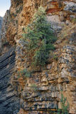 The tree grew on the orange rock in the Tien Shan Royalty Free Stock Photo
