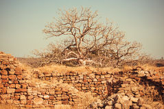 Tree grew on the ruins of an old brick building. stock photography