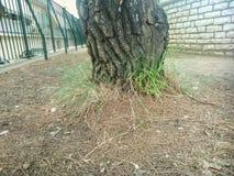 Tree. Grey grass in autumn in Corfu island Greece Stock Image