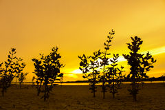The tree on ground arid, with sunlight in evening.  Stock Photo