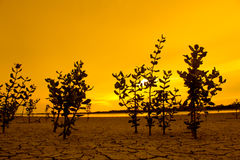 The tree on ground arid, with sunlight in evening.  Stock Photography