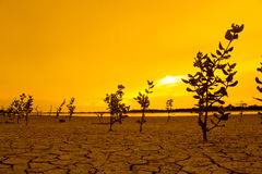 The tree on ground arid, with sunlight in evening, soft focus. Royalty Free Stock Photography