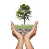 A tree on ground in the hands of men,Photo montage showing in co. Ncept of global warming and conserve forest nature,Beautiful world with our hands Stock Photos