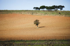 The tree and the plowed ground stock photography