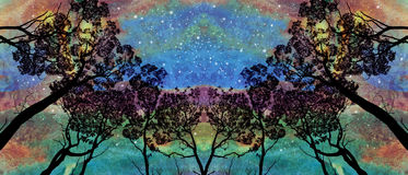Tree grove under aurora sky. Grove of tall gum trees Eucalyptus contrasted against an aurora like starlit evening sky. Star gazing background. Digitally textured Royalty Free Stock Images