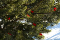 Tree with groving hearts Royalty Free Stock Photo