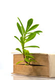 Tree grow from book Stock Photo