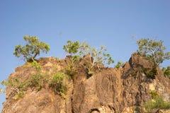 Tree grow on cliff Stock Photo