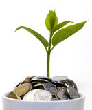 Tree grow in the coins. Within asian girl hands Stock Photo