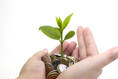 Tree grow in the coins. In a girl hands Royalty Free Stock Photo
