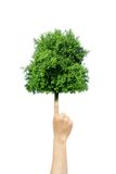 Tree grow from finger Royalty Free Stock Image