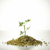 Tree grow on gold. Concept of development, growth, fortune, accumulation royalty free stock photos