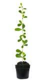 Tree grow up Stock Photos