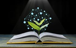 Tree grow up from book with light shining as getting knowledge on black background, concept as opening paper will see knowledge of. The world, learning by Stock Photo