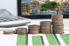 The tree are grow up on coins stack and financial report on desk Stock Image