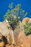 Tree on ocean cliff Royalty Free Stock Images