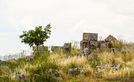 Tree growing along ruins of a wall Royalty Free Stock Image