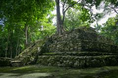 Tree growing on ancient Maya temple complex in Muil Chunyaxche royalty free stock image