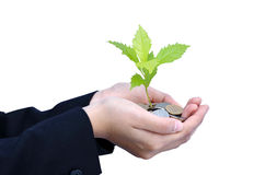 Tree growing on Baht coins. With business women hands Stock Photo