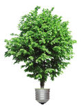Tree growing from the base of the light bulb Stock Photo