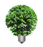 Tree growing from the base of the light bulb Royalty Free Stock Images