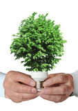 Tree growing from the base of the light bulb Royalty Free Stock Image