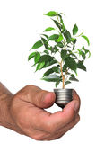 Tree growing from base of the light bulb in hand Royalty Free Stock Photo