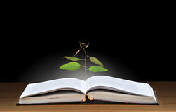 Tree growing from book Royalty Free Stock Image