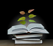 Tree growing from book Stock Image