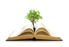 Tree growing from book Stock Images