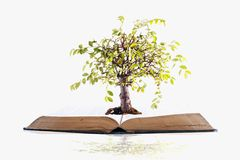 Tree growing on a book Royalty Free Stock Photography