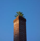 Tree Growing from Brick Chimney Royalty Free Stock Photos