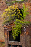 Tree growing from a brick wall Stock Images