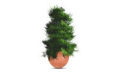 Tree Growing in Broken Egg Stock Photos