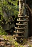 A tree growing through the coil spring. royalty free stock photo