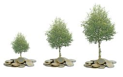 Tree growing from coins. Three tree growing from coins royalty free stock photography