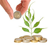 Tree growing from coins Royalty Free Stock Photos