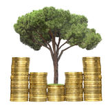 Tree growing from coins. Isolated Stock Photos