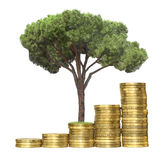 Tree growing from coins. Isolated Royalty Free Stock Image